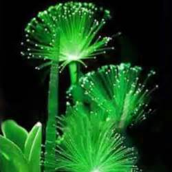 new rare 100 pcs emerald fluorescent flower seeds night