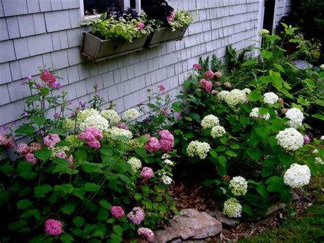 Garten Gestalten Hortensien passende hortensien pflege f 252 r wesentlich mehr bl 252 ten