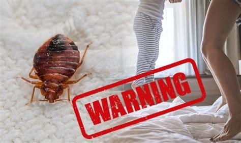 holidays bed bugs growing threat  hotel rooms