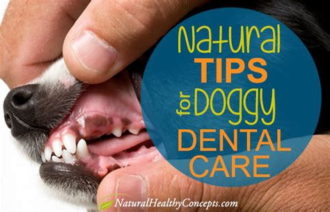 cleaning dogs teeth how to clean your s teeth naturally healthy concepts with a nutrition bias