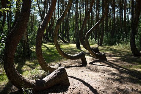 crooked forest in western poland mysterious facts crooked forest ten random facts