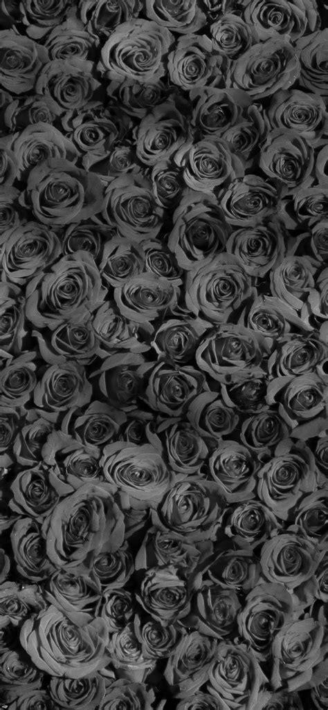 rose dark bw pattern iphone  wallpaper wallpapers