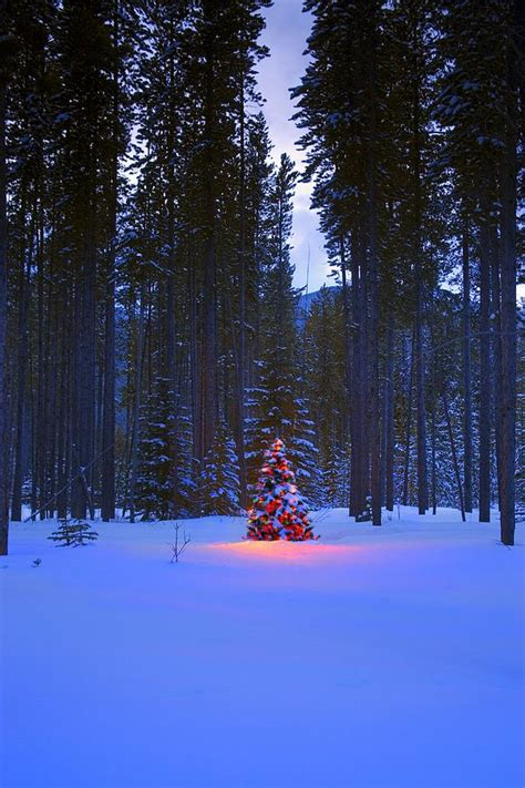 illuminated christmas tree in the woods photograph by