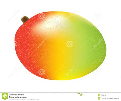 what color is a ripe mango three color mango stock photos image 7838223
