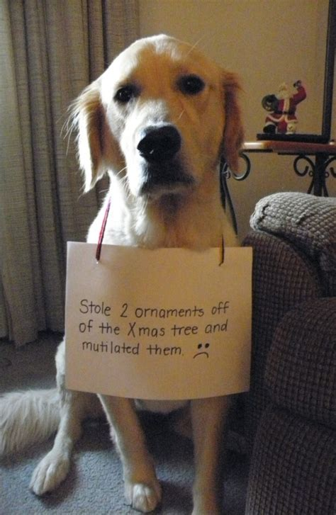 is ham bad for dogs 31 shaming pictures