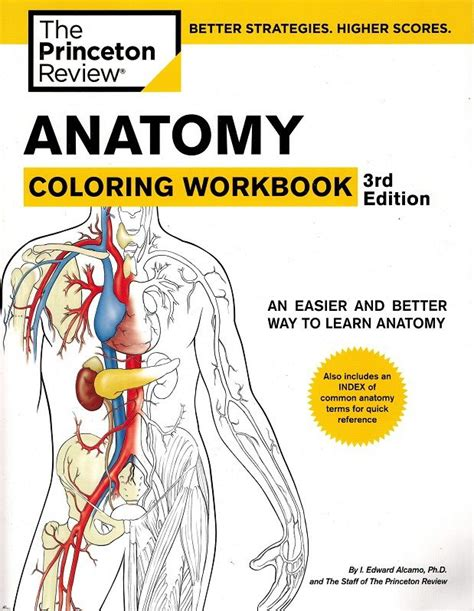 anatomy coloring book for health professions 7 best ultrasound images on ultrasound breast