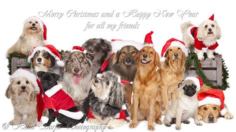 merry christmas  happy  year  dogs