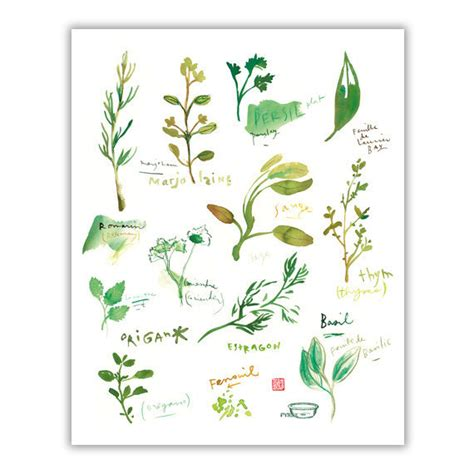 plantes aromatiques cuisine herb print watercolor herbs kitchen print botanical poster