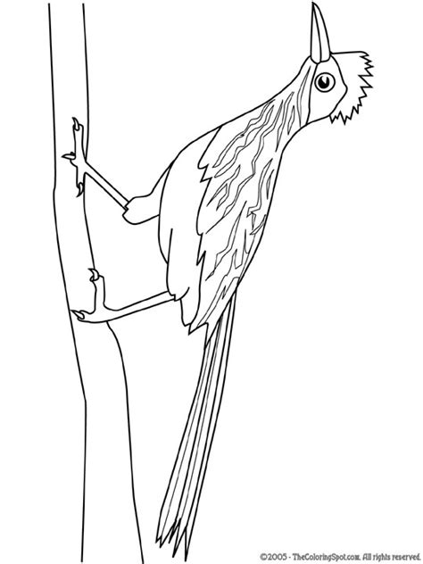 roadrunner bird coloring page roadrunner coloring pages 14 free coloring page site