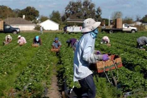 imagenes de trabajadores temporales agricultores en nuevo m 233 xico quieren inmigrantes