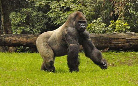 imagenes animales del zoologico impulsan el cierre del zool 243 gico de chapultepec forbes