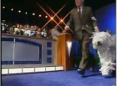 Animal Planet Live! Show (House Open) Universal Studios ... Missing Dog