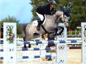Young jumping horses and dressage horses easy to ride with lots of