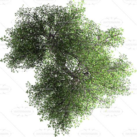Trees Top 16 tree top view photoshop images top view trees plans