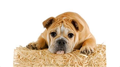 how to stop puppy barking how to stop a from barking breeds picture