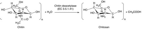 Research Papers On Chitin Degrading Enzymes by Research