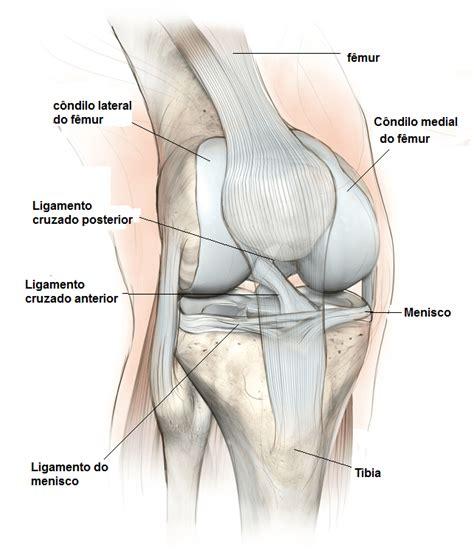 condilo femorale interno anatomia do joelho ligamentos articula 199 195 o m 218 sculos e