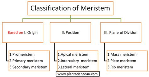 pattern classification meaning plant meristem definition and classification based on