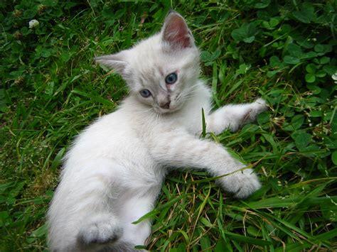 where do newborn kittens go to the bathroom image gallery kittens outside