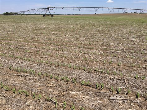 irrigated corn dodge county crop condition tour june 1