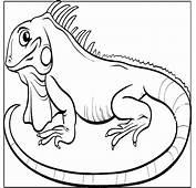 Dibujos De Reptiles Animales Vertebrados Colorear Y Pintar