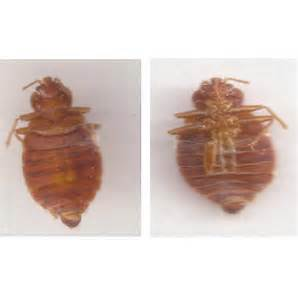 Apartment Bugs Unknown Bug Found In Apartment Suspected Of Leaving Bites