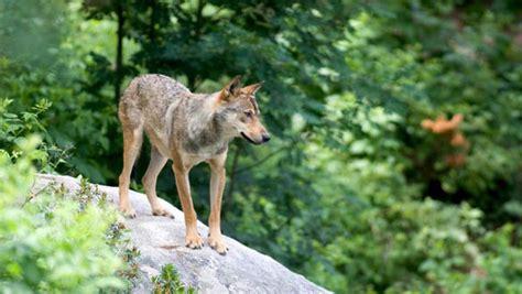 1325311170 elevages des pyrenees decouvrez patrimoine 224 visiter parcs de loisirs parcs animaliers
