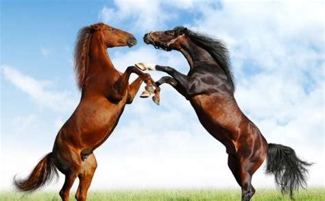 contoh hewan vivipar beserta gambar