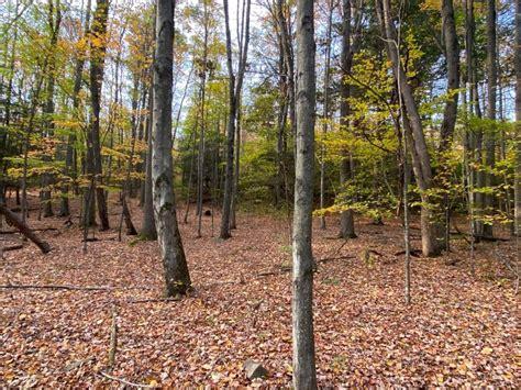 recreational property  mountain view whitetail