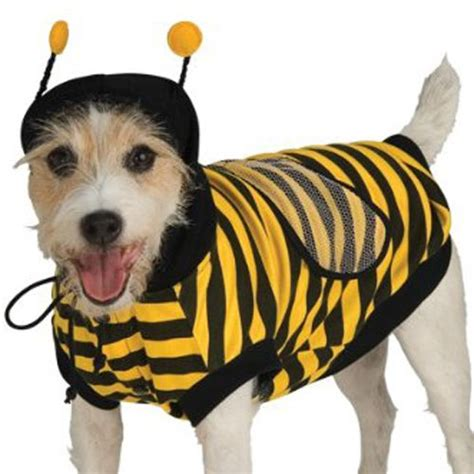 bumble bee costume for dogs best costume for 2017 mimi tara