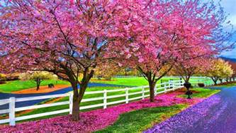 Beautiful Spring by Beautiful Spring Day Wallpaper Viewing Gallery