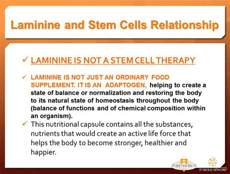 Laminine Stem Cell 45 best stem cell therapy you say images on stem cells cell biology and stem