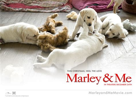 marley and me marley and me images marley me hd wallpaper and background photos 13563692