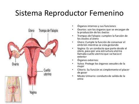 imagenes reales aparato reproductor femenino sistema reproductor tommy braun bati y gonza