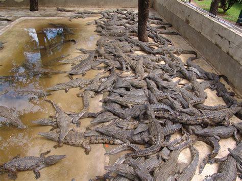 Victoria Falls Activities: Victoria Falls Crocodile Farm ...