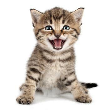 wann baby erstausstattung kaufen katzenbabys aufziehen die ersten wochen tipps f 252 r