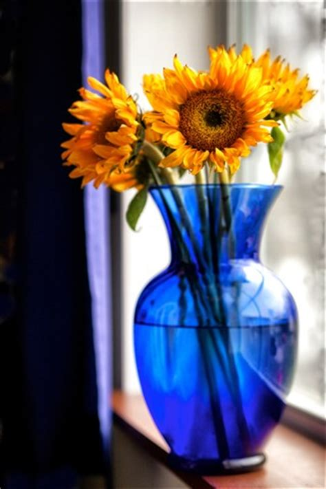 sunflowers in a blue vase: dcd49: galleries: digital