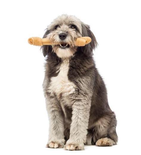 cibo per cani fatto in casa osso per cani fatto in casa ricetta 6 passi