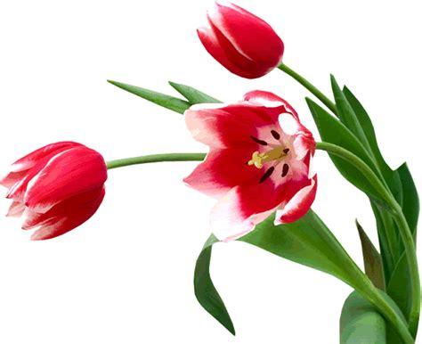 imagenes de flores exoticas colombianas cantinho encantado