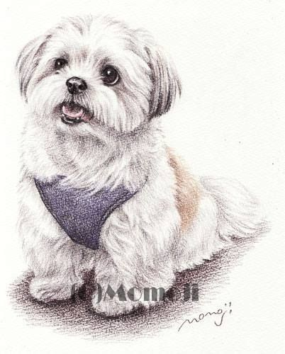 shih tzu drawing 424 best shih tzu images on doggies puppies and shih tzu