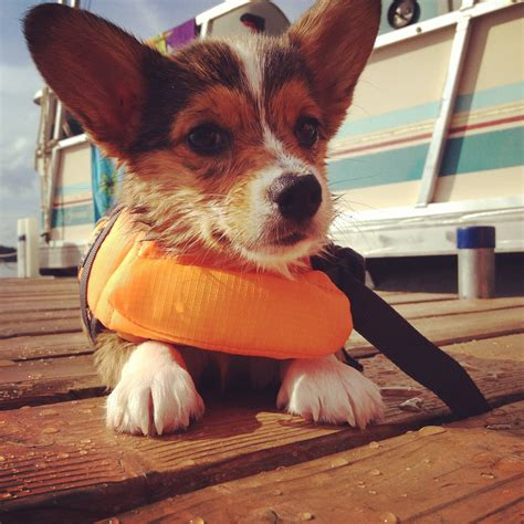 dog boat clothes 8 dog clothes that are actually practical healthy paws
