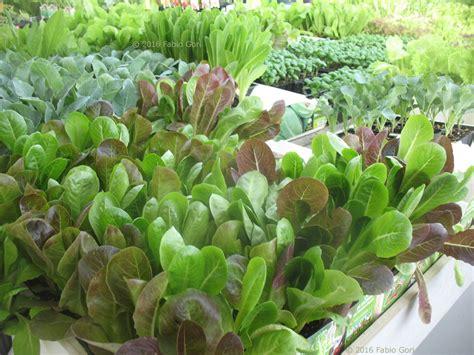 piante da orto in vaso orto sul balcone sul terrazzo in casa in giardino