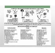 Actinomicetos Caracteristicas Y Aplicaci&243n Biotecnologica