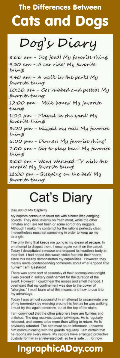 difference between cats and dogs infographic the difference between cats and dogs infographic a day