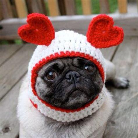 happy pug day pug pug