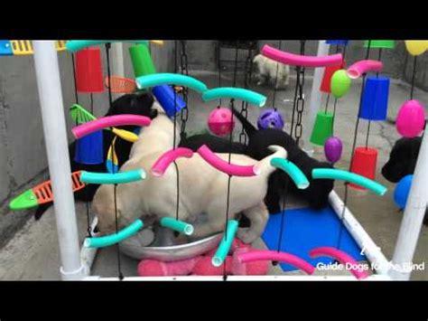 puppy adventure box gdb puppy socialization adventure box