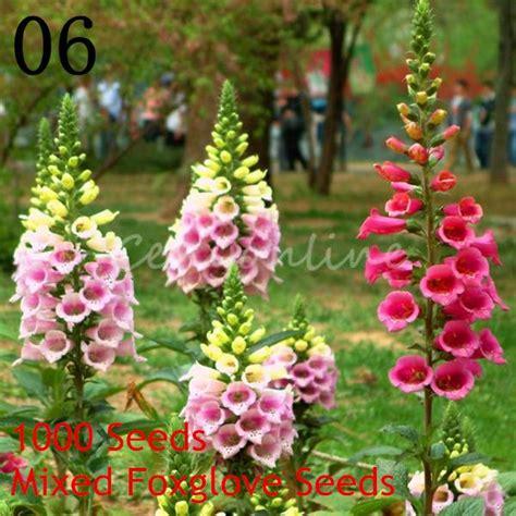 pflanzen pflegeleicht garten 2693 garten bepflanzen blumen siddhimind info