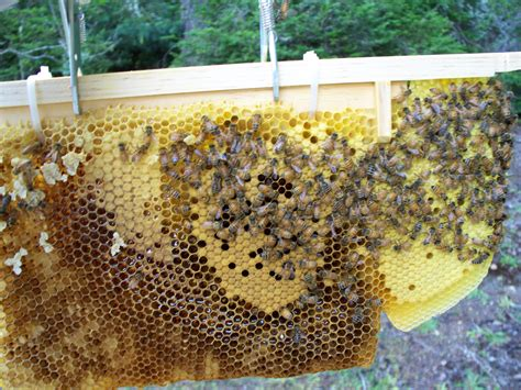 langstroth beehives the beekeepers digest