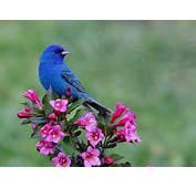 Beautiful Spring Flowers Birds  Foto Artis Candydoll