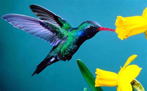 colorful hummingbirds with flowers animals